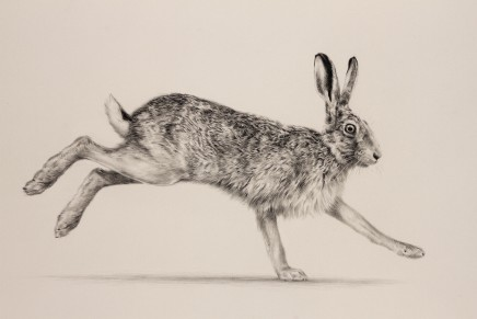 "Jonathan Pointer RUNNING HARE Graphite on Art board 11.5"" x 16.5"""