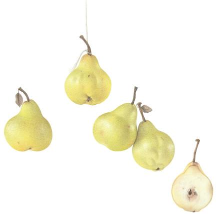 Dianne Frank, Abate Fetel Pears, 2018