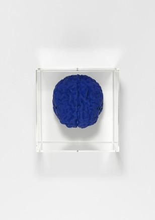 Angela Palmer, Brain of the artist in Yves Klein Blue, 2019