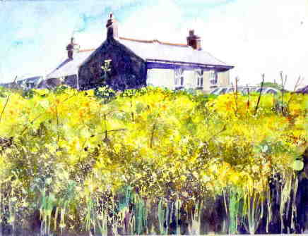 Janet Dunkley, Field of Rapeseed, 2019