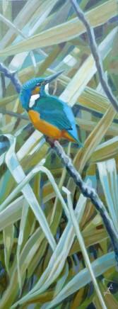Brin Edwards Kingfisher at Lackford Lakes
