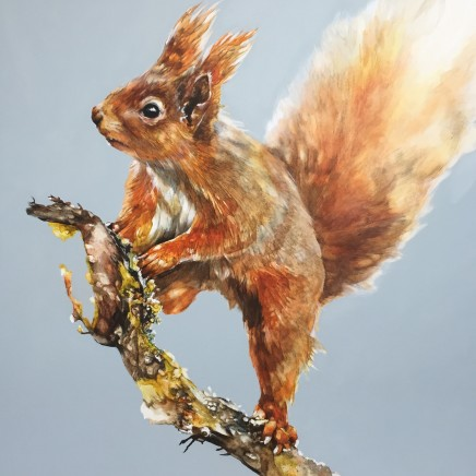 Paula Vize Seeking Red Squirrels