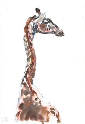 Mark Adlington , 55. Masai Giraffe , 2019
