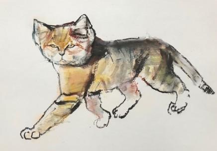 Mark Adlington , 14. Sand Cat, Sharjah , 2019
