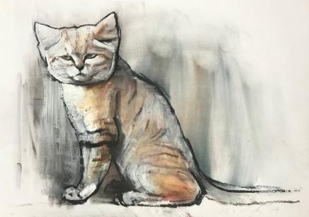 Mark Adlington , 13. Sand Cat, Sharjah, 2019