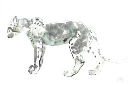 Mark Adlington , 26. Arabian Leopard, 2019