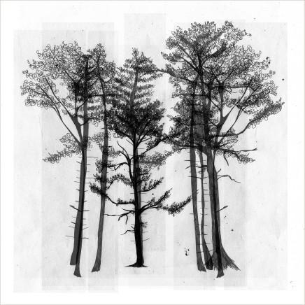 Arboria 3