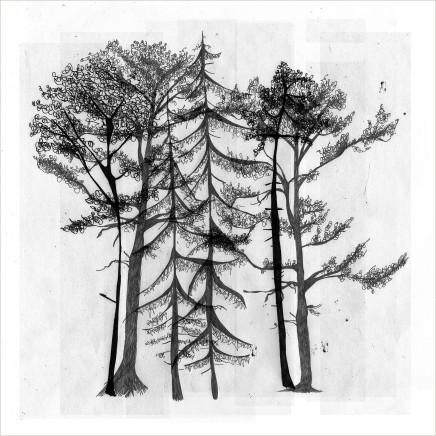 Arboria 4