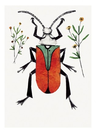 Beatrice Forshall, Scarlet Malachite Beetle