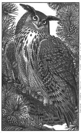 Colin See-Paynton, Eagle Owl