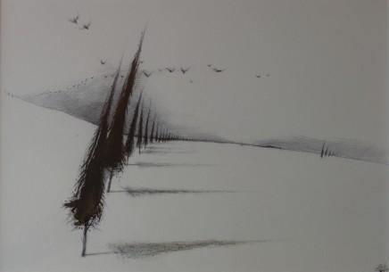 Dewi Tudur, Coed Cyprys / Cypress Trees