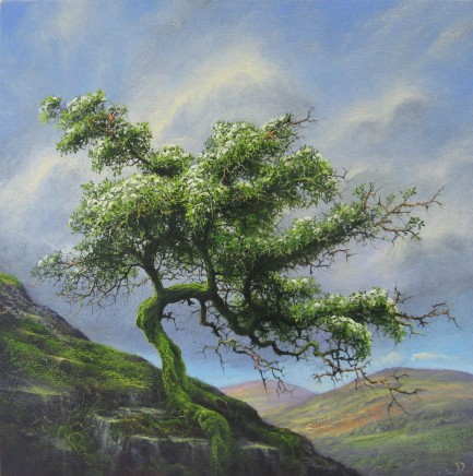 Gerald Dewsbury, Mountain Hawthorn