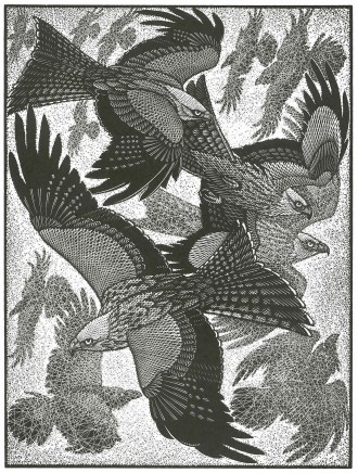 Colin See-Paynton, Red Kites and Ravens