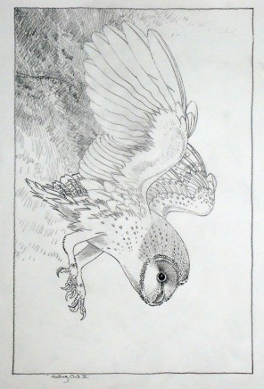 Colin See-Paynton, Hunting Owl II