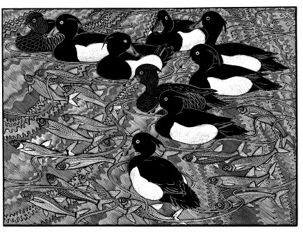 Colin See-Paynton, Tufted Duck and Bleak £395