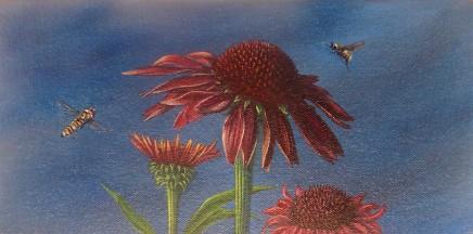 Kim Dewsbury, Garden Life with Echinacea