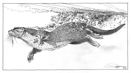 Colin See-Paynton, Otter I