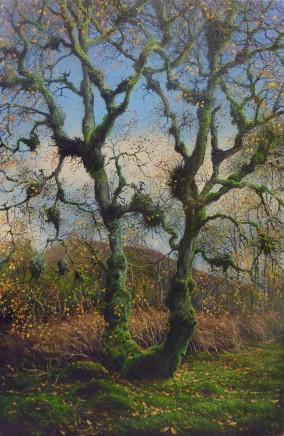 Gerald Dewsbury, Witches Broom Tree