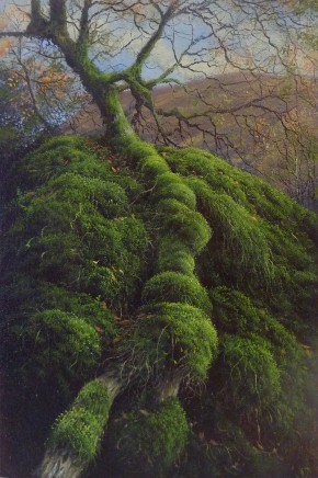 Gerald Dewsbury, Out of the Moss