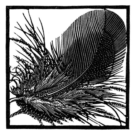 Colin See-Paynton, Black Feather £250