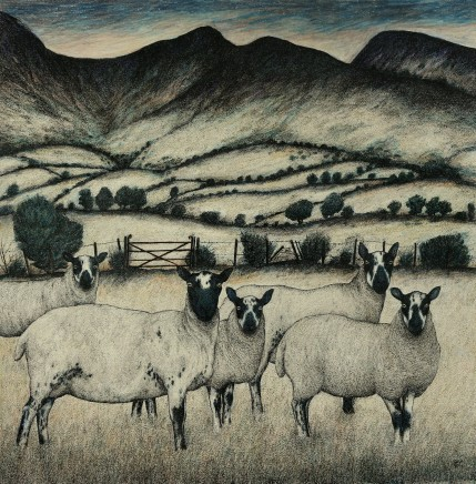 Seren Bell, Beulah Speckled Face Sheep, Welsh Boarders