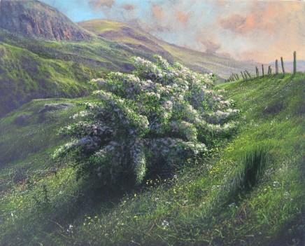 Gerald Dewsbury, Evening Hawthorn I, Arenig