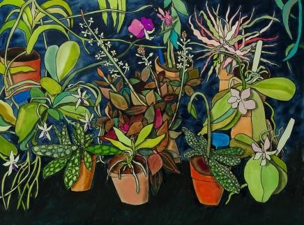 Susan Gathercole, Treborth Orchid House
