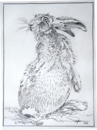 Colin See-Paynton, Alert Hare