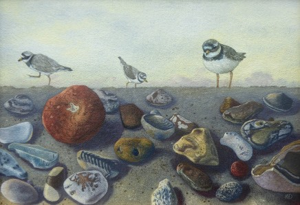 Kim Dewsbury, Norfolk Pebbles with Ringed Plover