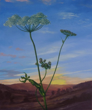 Kim Dewsbury, Flowering Hogweed
