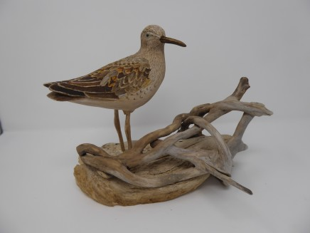 John & Marilyn Davies, Curlew Sandpiper