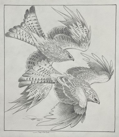 Colin See-Paynton, Red Kite Duo