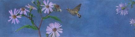 Kim Dewsbury, Garden Life with Asters