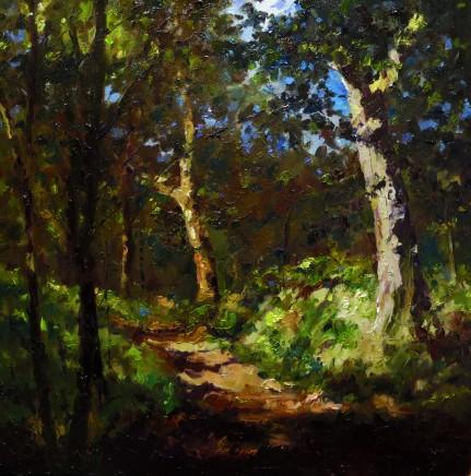 David Grosvenor, Woodland Walk, Tan y Bwlch VII