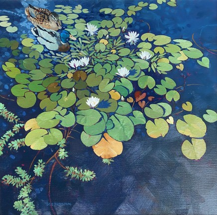 Colin See-Paynton, Mallards among the Lilies