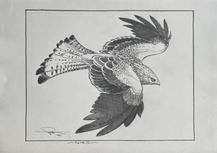 Colin See-Paynton, Red Kite III