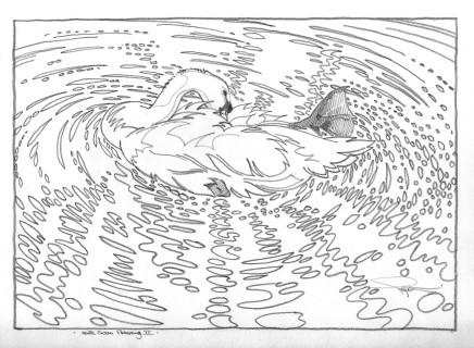Colin See-Paynton, Mute Swan Preening II