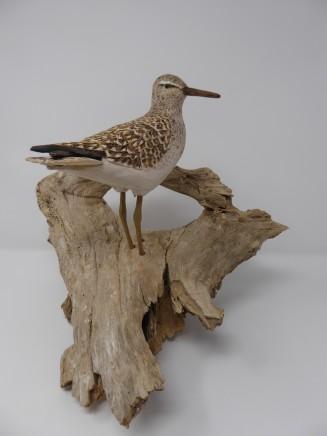 John & Marilyn Davies, Wood Sandpiper