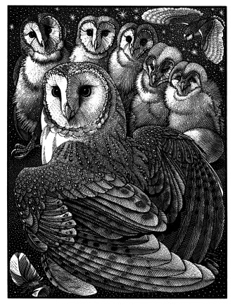 Colin See-Paynton, Parliament of Owls