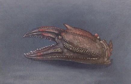 Kim Dewsbury, Crab Claw II