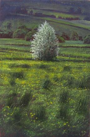 Gerald Dewsbury, Buttercup Meadow