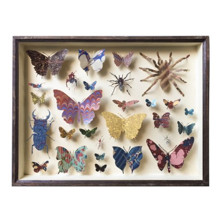 Helen Ward Entomology Case 1 Antique entomology drawer, bookbinding paper and enamel pins 29 x 39 cm
