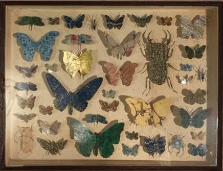 Helen Ward Entomology Case 2 Original drawer Victorian hand marbled paper and enamel entomology pins 30 x 38 x 5.8 cm
