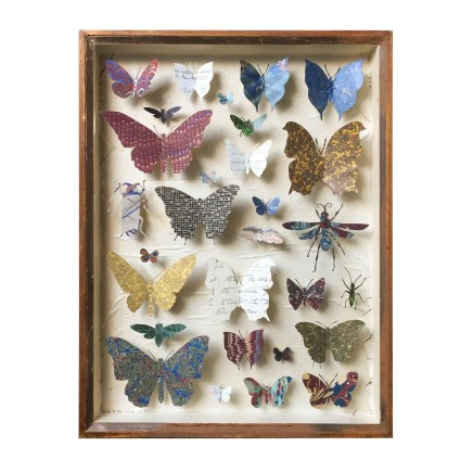 Helen Ward Entomology Case 2 Antique entomology drawer, bookbinding paper, victorian hand written letters and enamel pins. 39 x 29 cm