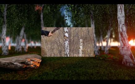 Peter Barnard, 'Forest', (2016) video.