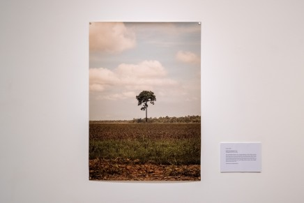 Giovana Birck 'Lonely Tree Series'