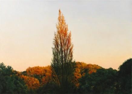 A Poplar viewed from Blockley