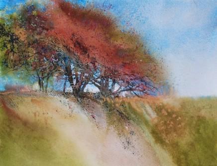 Autumn Hawthorn SOLD
