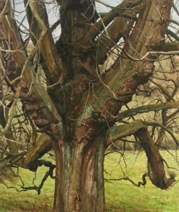 Cotswold trees IV