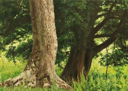 Cotswold trees I